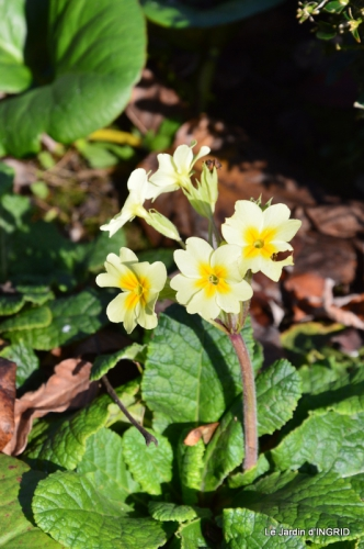 kakis,dernières fleurs,pt jardin,Julie,bassin 050.JPG