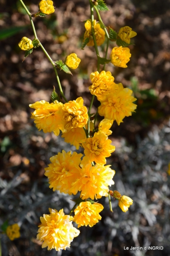 jardin printemps 072.JPG