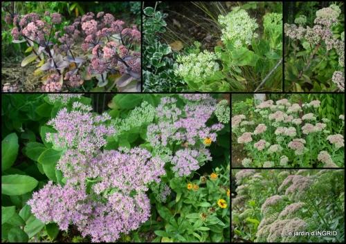 2018-08-31 lantanas,jardin aout,.jpg