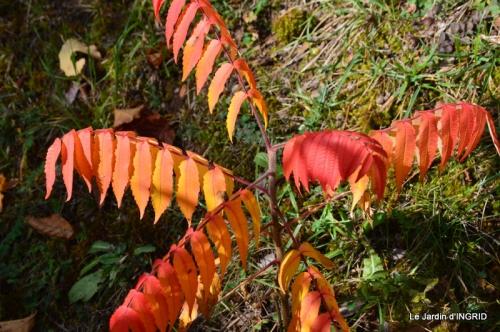 les arbres en automne,cabane 098.JPG