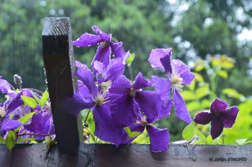 jardin,chez Bernadette,puces,cygnes,pluie 245.JPG
