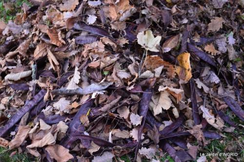 jardin, feuilles,sauges,gloriette,land art 145.JPG