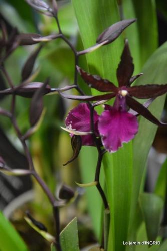 canal,jardin,Mombazillac,bonzais,orchidées 156.JPG