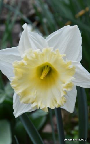 jardin (3 semaine de mars) 010.JPG