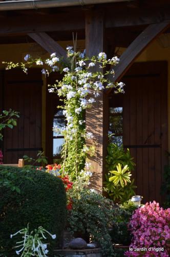 jardin,asters,fleurs blanches,chatte,rosiers roses 053.JPG