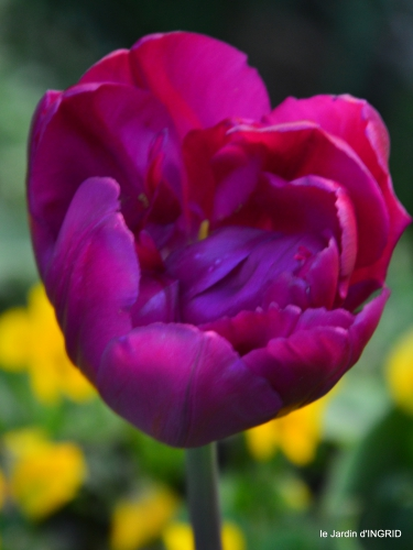 herons,fête des fleurs Bergerac,tulipes,jardin 124.JPG