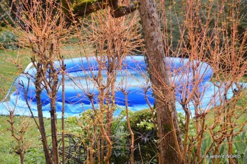 semis,bassin,tour du jardin 032.JPG