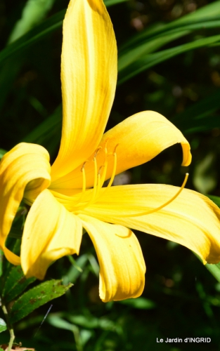 jardin juin,cabane,bouquet 011.JPG