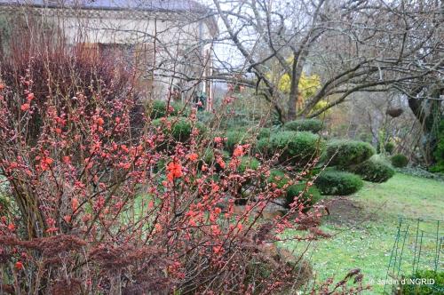 pluie,violettes,hélébores,jonquilles,jardin 065.JPG
