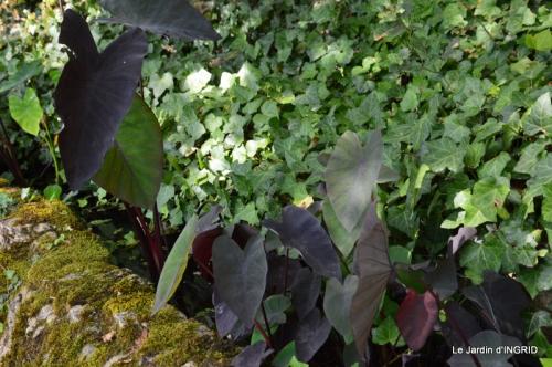 les jardins d'eau de Carsac 077.JPG