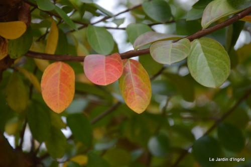 sauges,plectanthrus,Romane,canal,manthe r.,automne 024.JPG