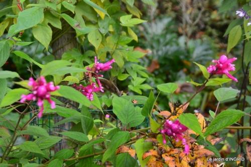 troc,automne,serre 072.JPG