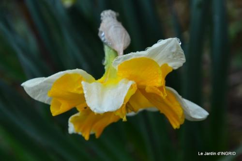 jardin (3 semaine de mars) 090.JPG