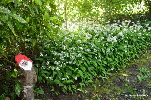 colline,orchidée,nature,jardin fleuri 032.JPG