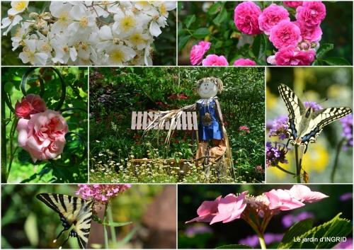 2017-07-05 jardin été,hydrangeas,journaliste3.jpg