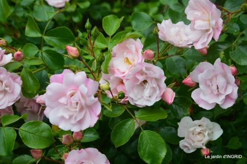 tour jardin de mai ,les épouvantails,préparation 028.JPG
