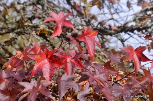 troc,automne,serre 030.JPG