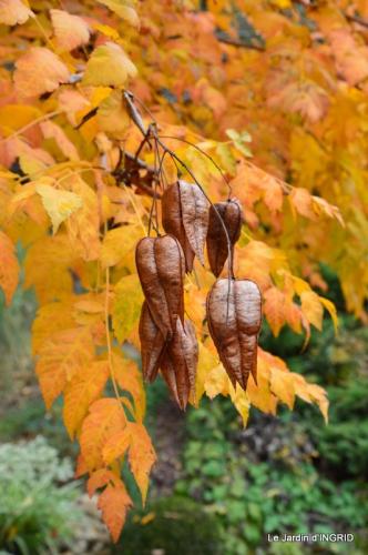 les arbres en automne,cabane 018.JPG
