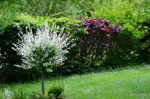 roses,Lalinde,toit cabane,pourpre,eglise,jardin tondue 093.JPG
