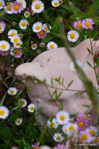 canal,fleurs blanches,marguerites,LE FLEIX,osier 087.JPG