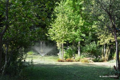 Belves puces,jardin,cygnes,bouquet blanc,arrosage 148.JPG