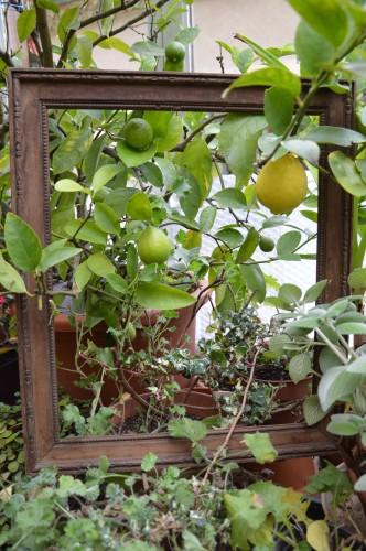 chez Maryse,pour tableaux,jardin 2013 032.JPG