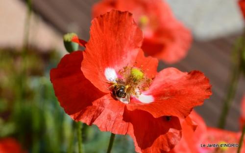 épouvantails ,jardin,roses 053.JPG