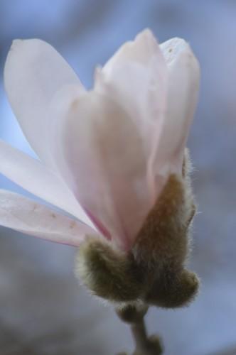 abeilles,zoom fleurettes 023.JPG
