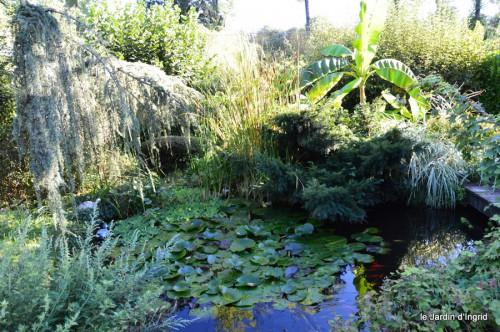 jardin,asters,fleurs blanches,chatte,rosiers roses 042.JPG