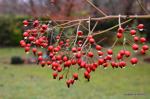 jardin en hiver,à Ciron 088.JPG
