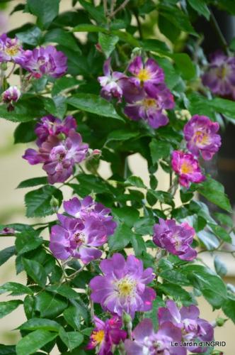 fête de la fraise Vergt,roses jardin 176.JPG