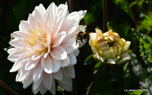jardin juin,cabane,bouquet 078.JPG