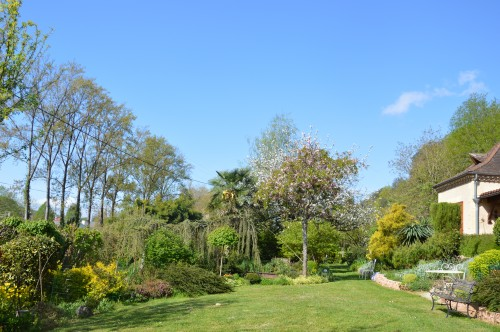 iris,arbre de judée,pivoine,Arya,viburnum,pts plants,cytise,akéb 039.JPG