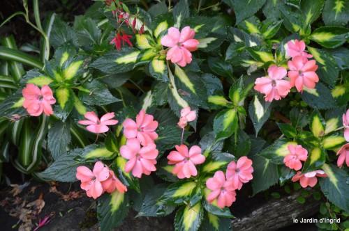 jardin,fruits,Caro,papillons,manthe religieuse,Lalinde 013.JPG