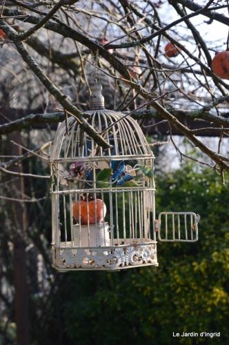 jardin givré,oiseaux 109.JPG