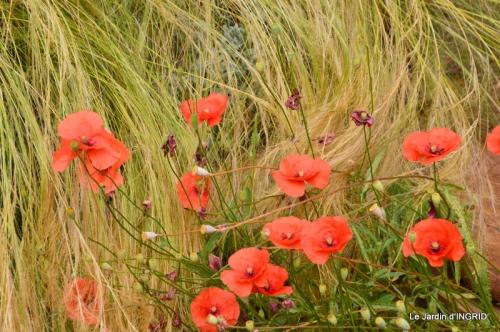 jardin juin,cabane,bouquet 113.JPG