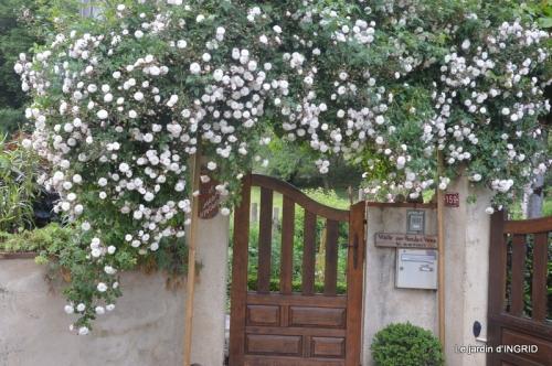 jardin en mai,visites bus,petit jardin 270.JPG