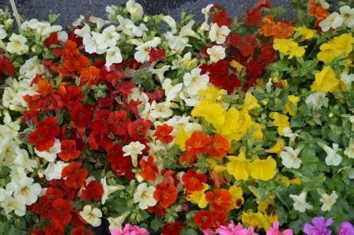 chateau  Banes,marché fleurs Lalinde 064.JPG