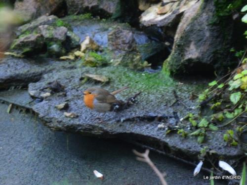 semis,bassin,tour du jardin 078.JPG