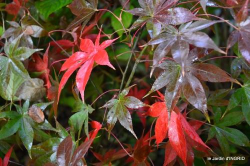 automne 2016 074.JPG