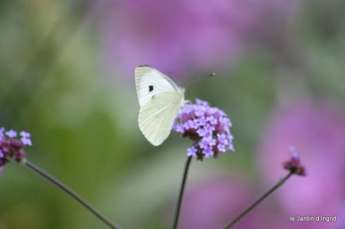 coeur des fleurs,papillons,libellules 128.JPG