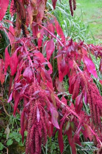 les tons roses,choux frisés,automne 051.JPG
