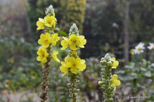 brume,dentelles,fleurs,Noel Jardiland 033-002.JPG