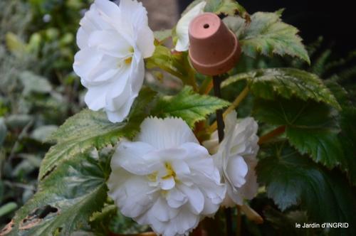 Fleurettes,Dordogne,jardin 109.JPG