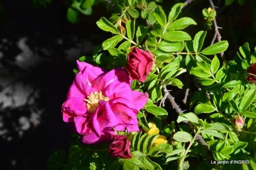 muguet,féte des fleurs Lalinde,jardin 098.JPG