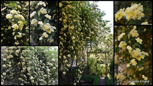 2014-04-18 géraniums,glycine Monpazier,cabane,arums,fleurs sauvages.jpg