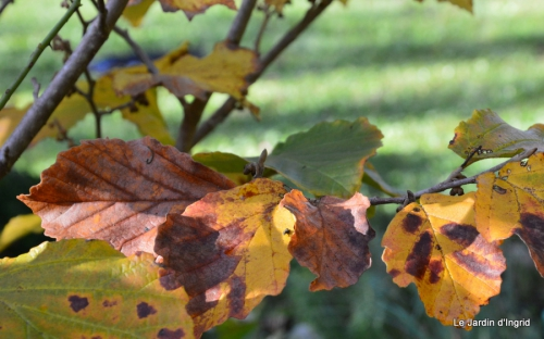 jardin automne,Arya avec Nicky 007.JPG