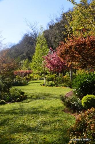 jardin confiné ,osier,magnolia jaune 134.JPG