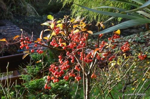 troc,automne,serre 048.JPG