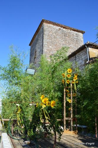 tournesols,podium,Lucas,jardin,Calès 052.JPG
